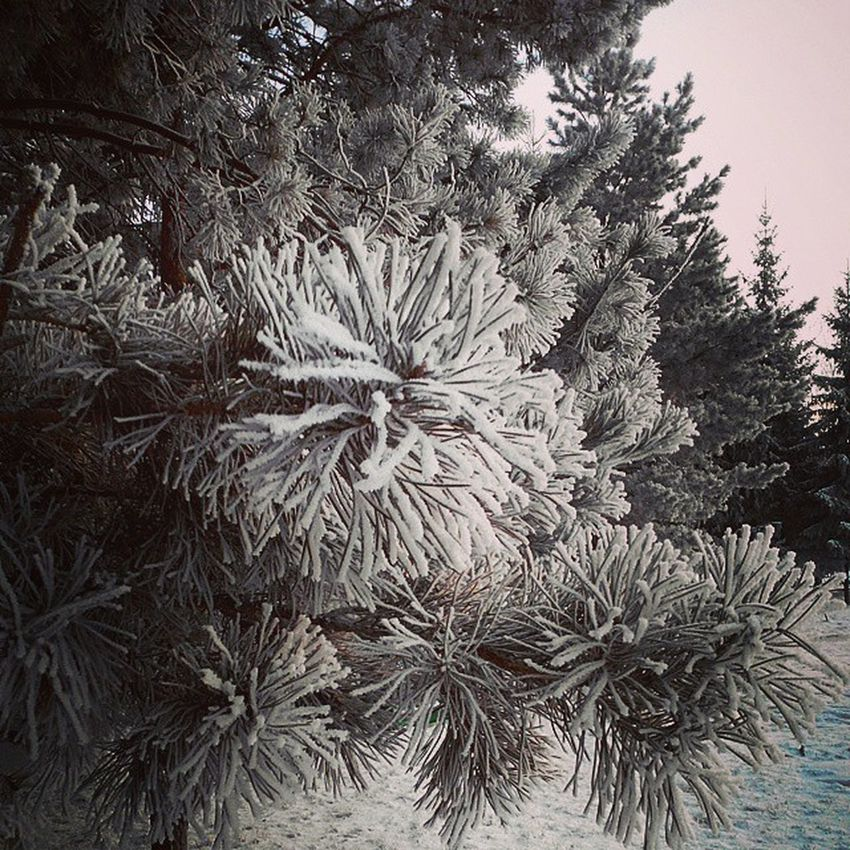 омск утро снег иней сибирь Omsk Siberya Snow Hoarfrost Morning