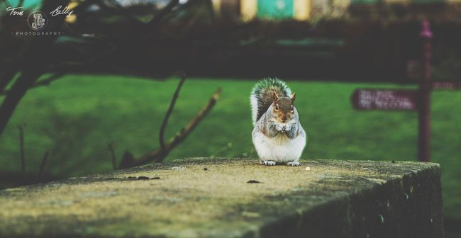 Squirrel Check This Out Hanging Out Hello World Squirrel Animal Park Hi! Enjoying Life Taking Photos Cheese! EyeEm Beautiful Nature_collection Photography Art Green Taking Photos Hello World Photo EyeEm Gallery Photooftheday Check This Out