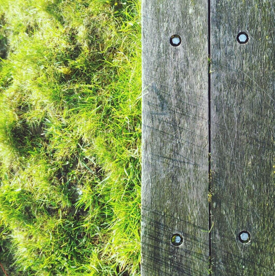 Things That Are Green Nature Vs Wood Grass Nature