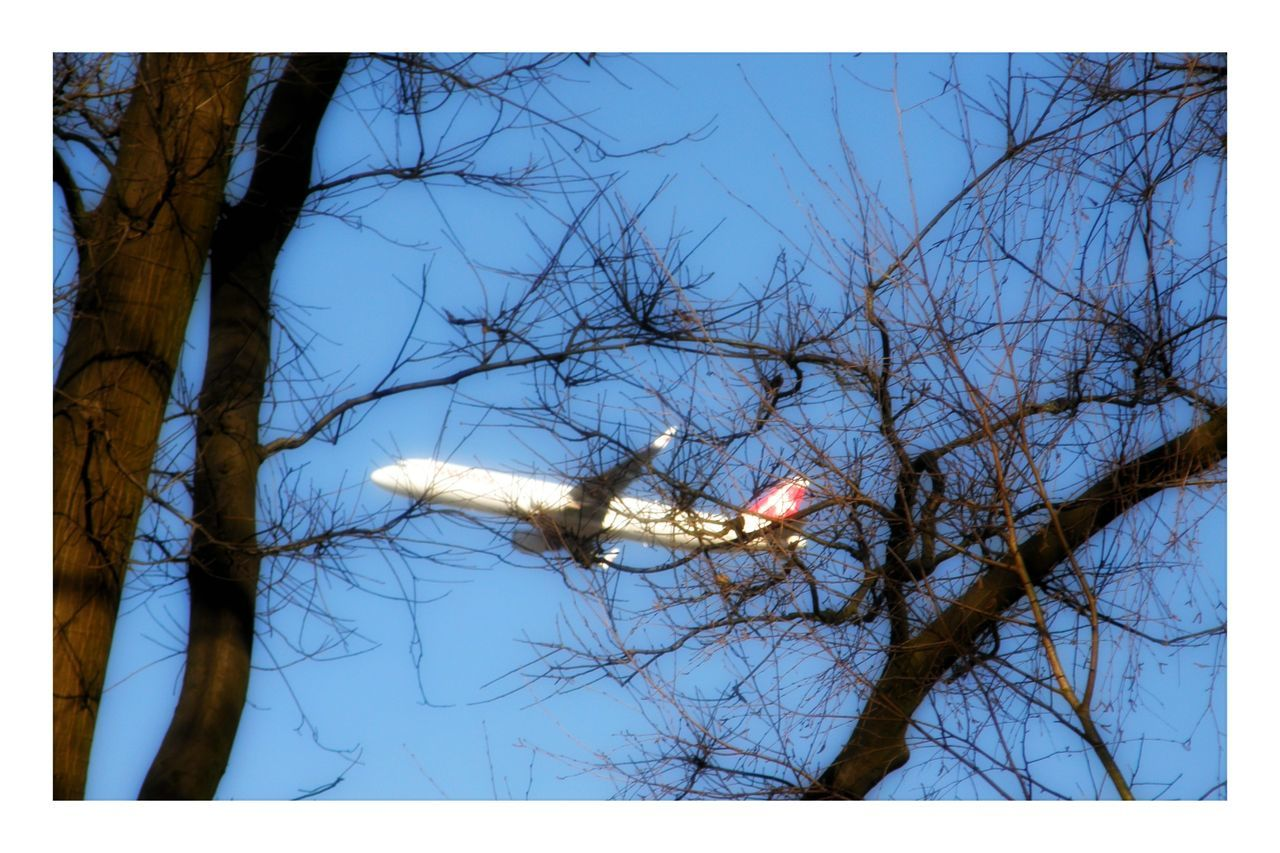 Trees Airplane Flying Travel Transportation Blue Clear Sky Nature Outdoor Photography