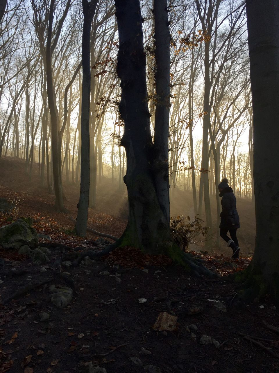 tree, forest, nature, tree trunk, one person, full length, silhouette, autumn, landscape, branch, real people, outdoors, day, beauty in nature, sky, people
