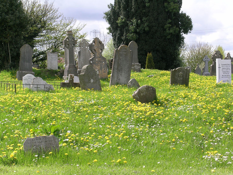 Beautiful stock photos of death, Cemetery, Day, Death, Flower