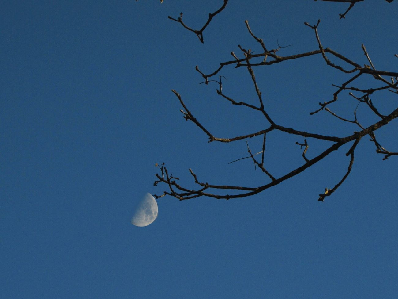 Like a small leaf. Leaf Moonphotography Creativity Creative Photography Sky Sky_ Collection Brunches