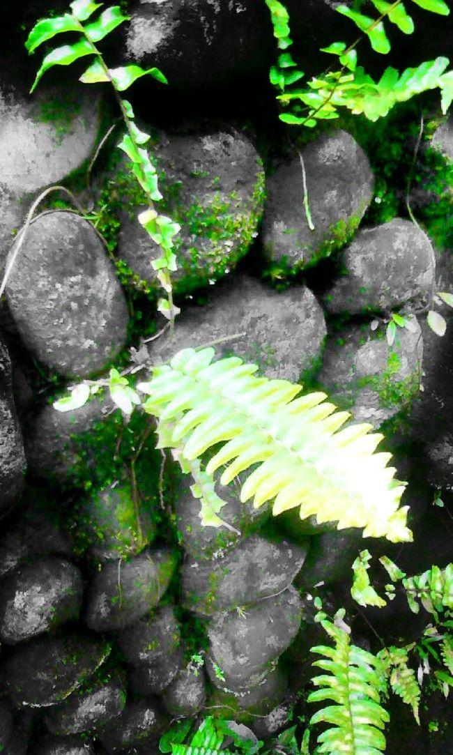 Stones Pared De Piedra Nature Beautiful Nature Hello World Looking Al Aire Libre Flowers,Plants & Garden Colors Of Nature Plants 🌱 PiedrasNegras Piedrasnaturales