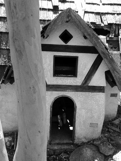 Building Exterior Architecture Built Structure Outdoors Day No People Storytime Forest Photography Laughter Adventure Fun Childsplay Small House In The Big Forest. Architecture Amazing View House Gumtrees Mount Gladstone Small Building On Hilltop