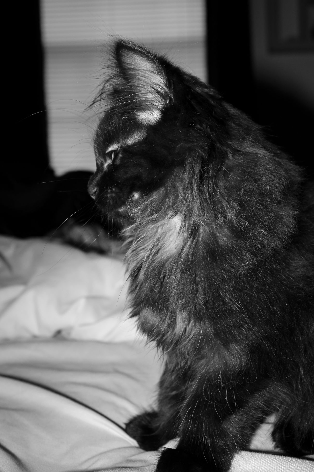 Black And White Animals Black And White Photography Black Cat Black Cat Photography Black Cat Portrait Black Cats Black Cats Are Beautiful Bnw Bnw_captures Bnw_collection Bnw_friday_eyeemchallenge Bnw_planet Close-up Pets