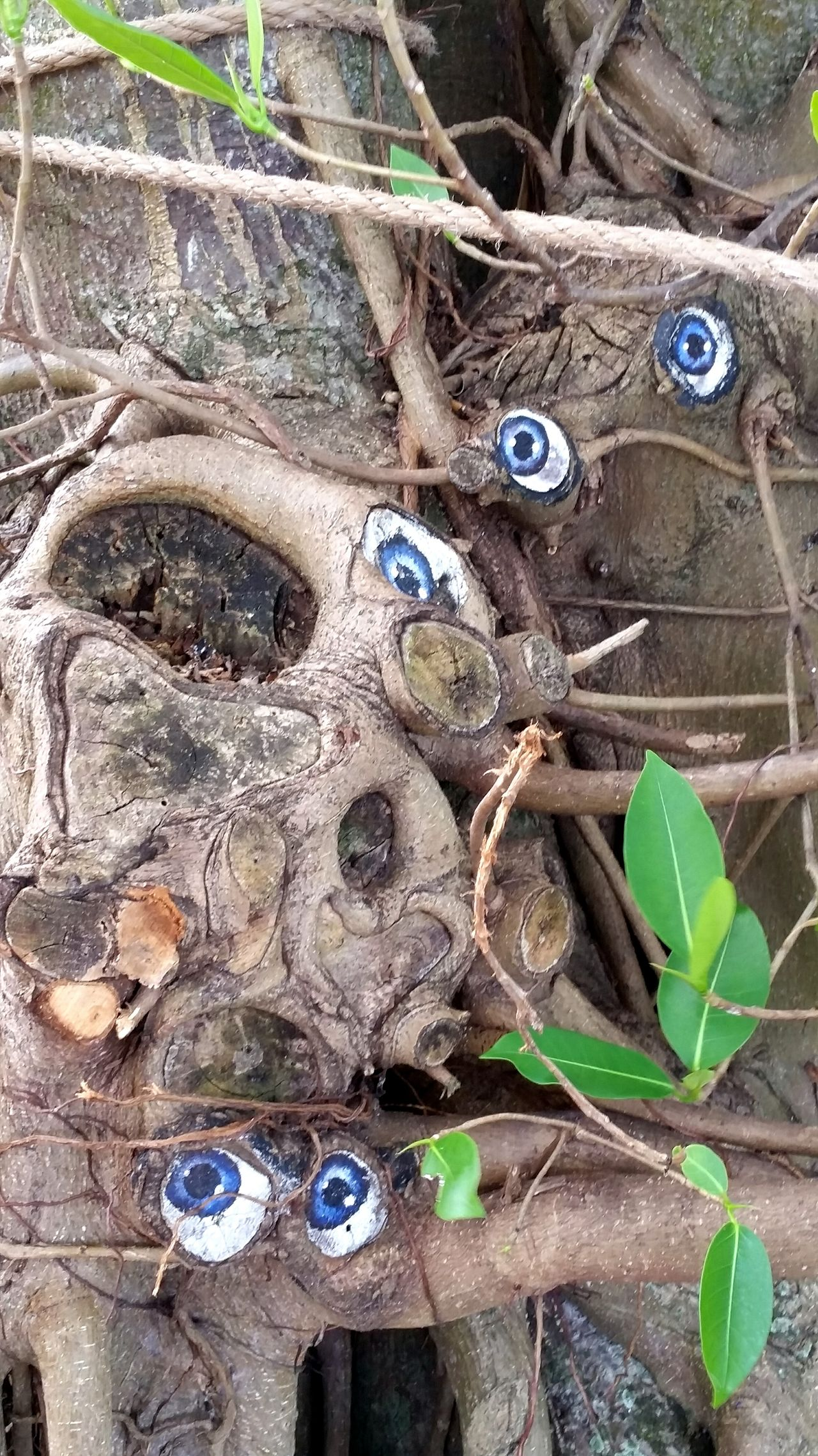 Creativity Hugging A Tree Tree Porn Art In Nature Eyes Watching You Eyes Strangler Fig Spirit Of The Tree Blue Eyes Trees Hugging Trees