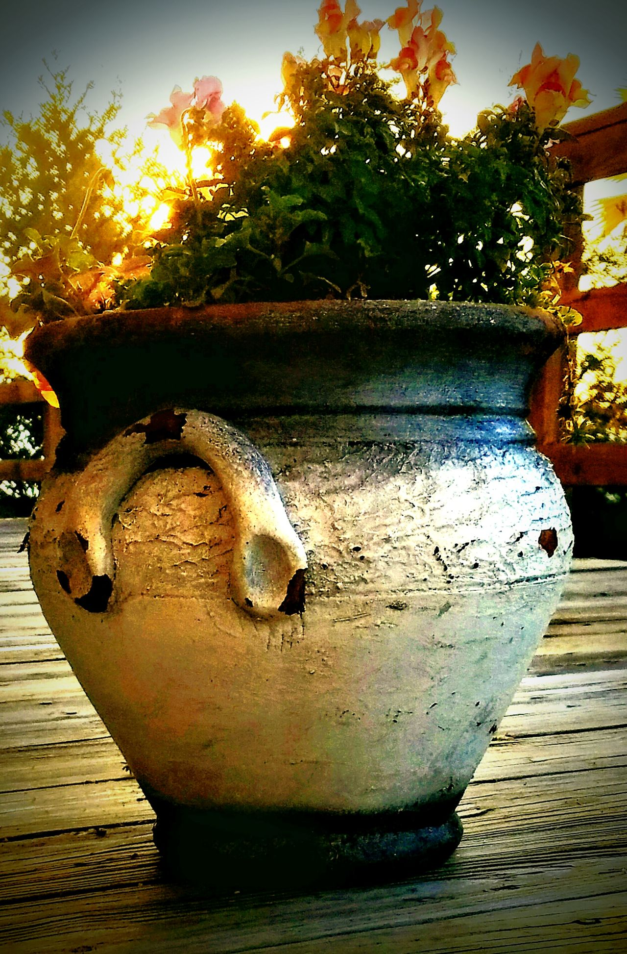 No People Close-up Outdoors Day Flowers Flower Pot Rustic Wood Wooden Post Wooden Planks Porch Porch Railing Plants 🌱 Plants And Flowers Potted Plants Potted Plants In Sun Potted Plants Collection Samsung Galaxy S7 Eyeemphotography Plant Life Antique Antique Flower Pot Clay Pot Morning Sky Sky