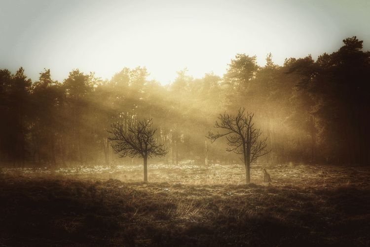 Tree Fog Landscape Field No People Outdoors ForTheLoveOfPhotography Canonphotography Trough The Lens Eos70d EyeEmNewHere Canon_photos Canon 70d Canon EOS 70D Breathing Space Investing In Quality Of Life The Week On EyeEm EyeEm Selects Sun Rays Sun Rays Through Trees Hazy Days Just Me And My Camera Loving Nature Nature Dawn