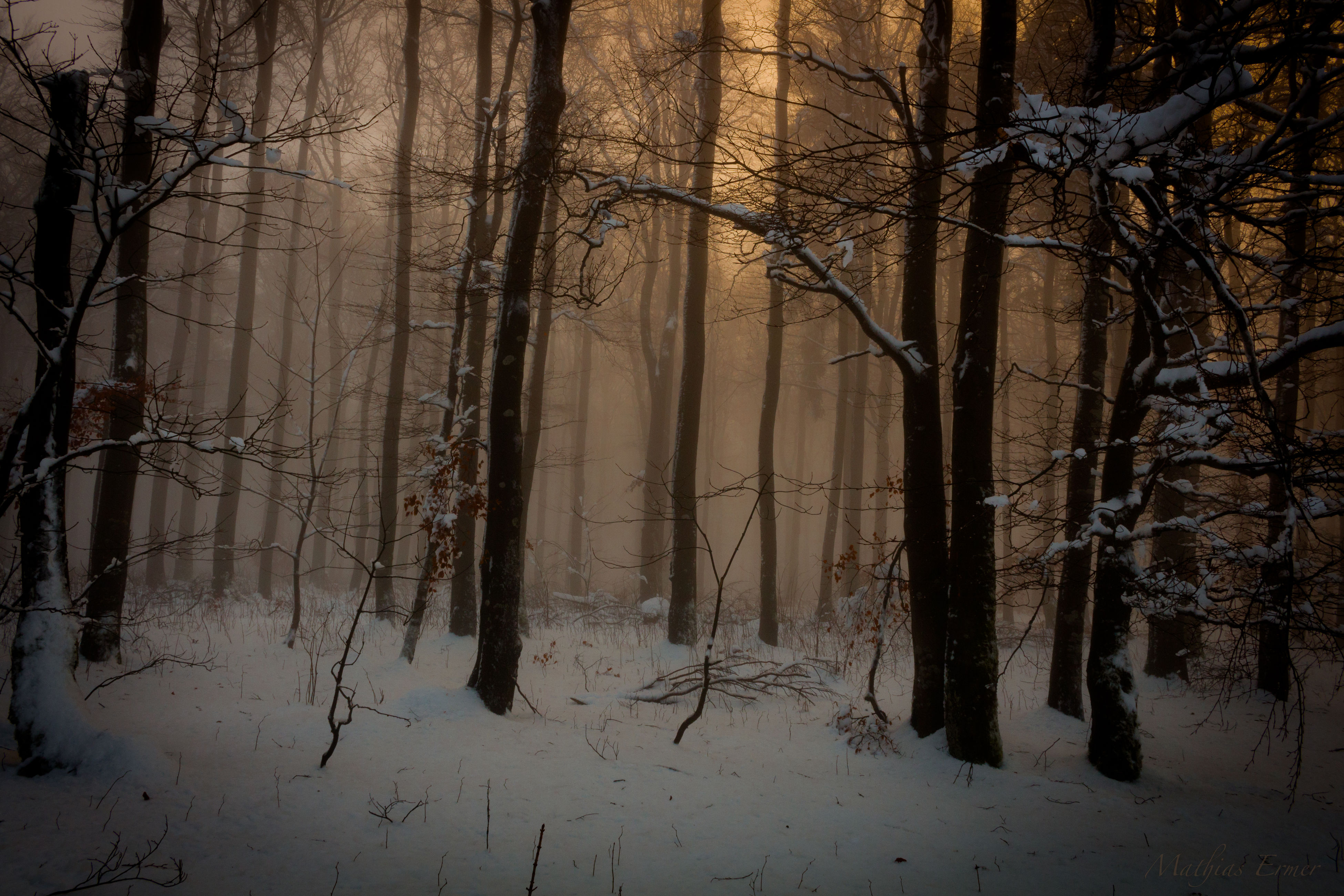 winter, snow, cold temperature, bare tree, tree, tree trunk, season, branch, weather, tranquility, nature, covering, frozen, tranquil scene, no people, outdoors, forest, beauty in nature, landscape, day