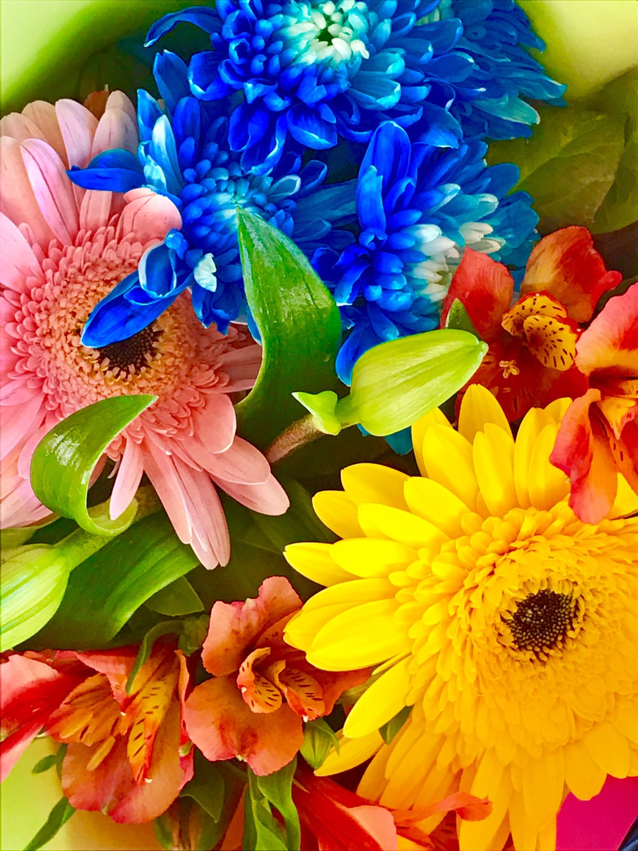 Flower Petal Fragility Flower Head Close-up Day No People Outdoors Lights And Shadows Focus On Foreground Freshness Beauty In Nature Illuminated Sunlight City Green Color Pink Color Red Colour Blue Colour Yellow Colour Multi Colored Backgrounds Pollen Blooming Morning
