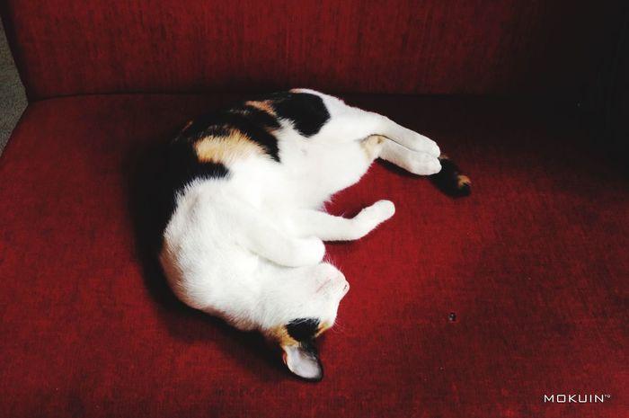 ••• Kute Cat ••• Taking Photos Relaxing Landscape Cat Kute!!