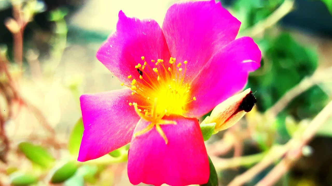 Coloridos Perfect Flores Flor Flower Flowers,Plants & Garden Garden Flowers, Nature And Beauty Flower Collection Jardim De Casa Pedrasobrepedra Jardins Eyemphotography Eyemflowerlover Eyem Flower_collection Exclusive  Eyemrosa Eyem Flowers Eyemflowers Beautiful Exclusivo UaU Nature Pink Folhas