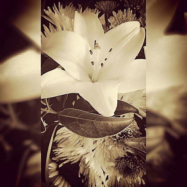 Flowers Beautiful Monocrome Allthingsbeautiful Themoment TheMoment-2014EyeEmAwards Thetraveler-2015EyemAwards TheTraveler