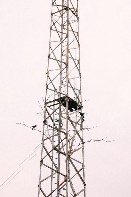 Bangkok Bangkok Thailand. Birds Died Tree Electricity  Power Line  Thailand Tree