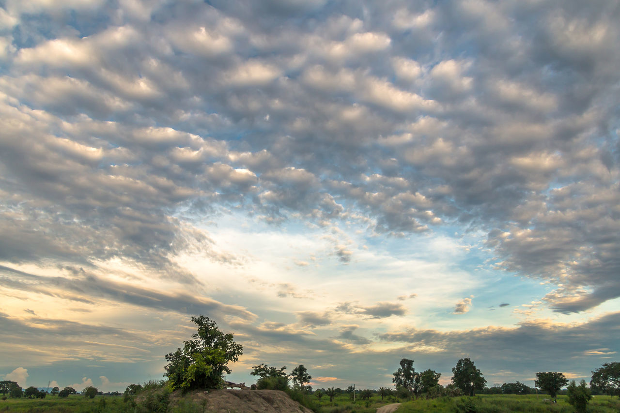 Landscape in cloudy day with fluffy cloud Background; Beauty In Nature Blue Sky; Cloud - Sky Cloudy; Day Evening; Fluffy Cloud; Landscape; Meadow; Nature No People Outdoors Scenics Sky Sunset Tranquil Scene Tranquility Tree Tropical; White Cloud;