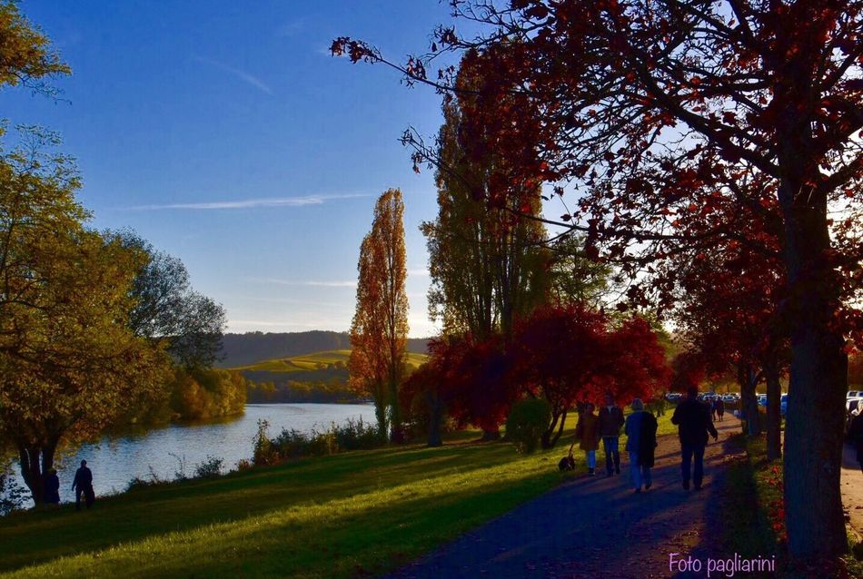 A Day Like No Other EyeEm Nature Lover Nature Photography Nature Tree Beauty In Nature Eye4photography  EyeEm Gallery EyeEm Landscape Nature On Your Doorstep Autumn Impressions🍁🍂🎃 EyeEm Best Shots Nikonphotographer EyeEm Best Shots - Nature Autumn Collection Sunset Sunset Silhouettes Autumn🍁🍁🍁