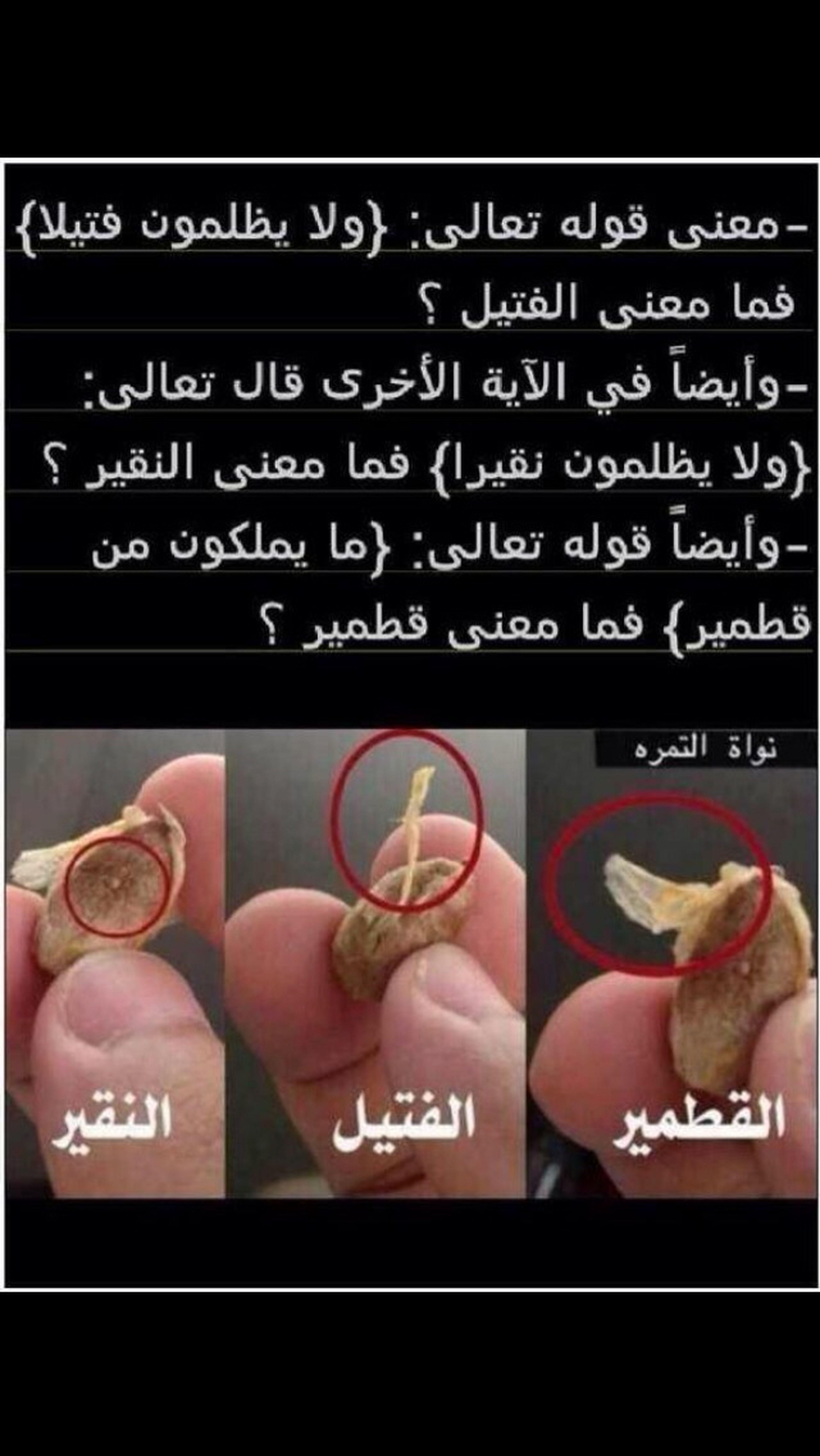 معنى {القطمير والفتيل والنقير} في القرآن الكريم