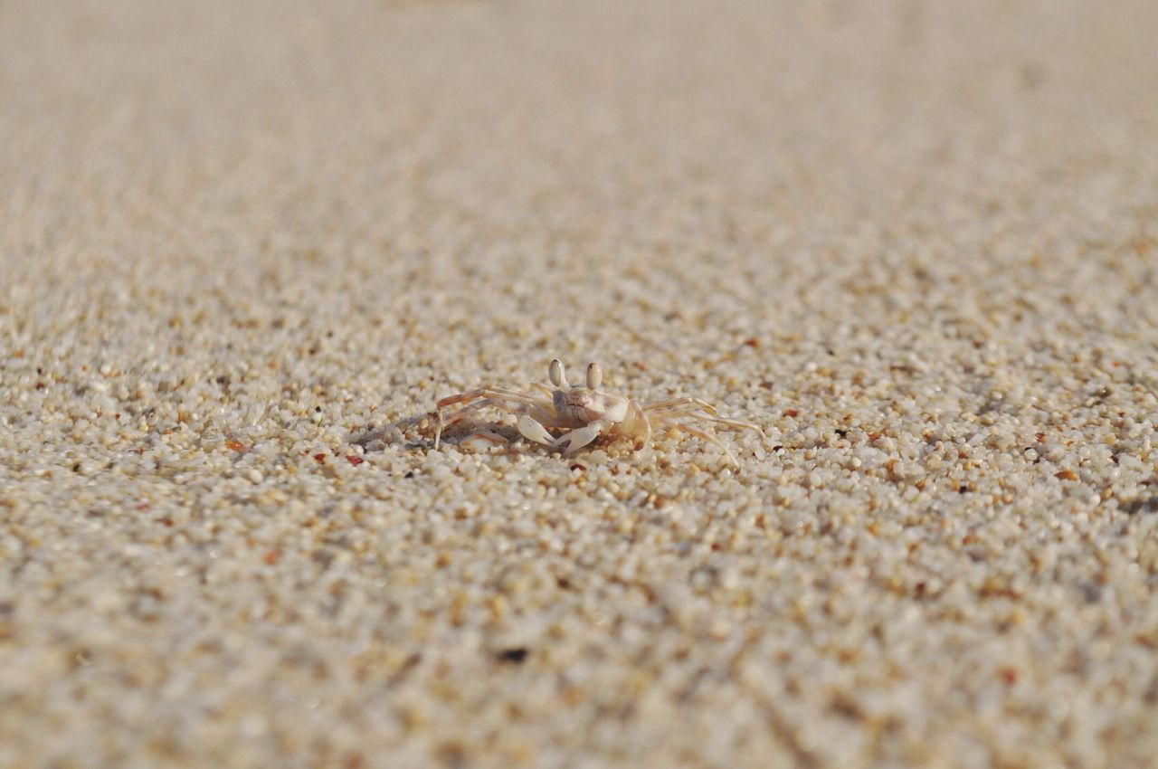Crab At Beach On Sunny Day