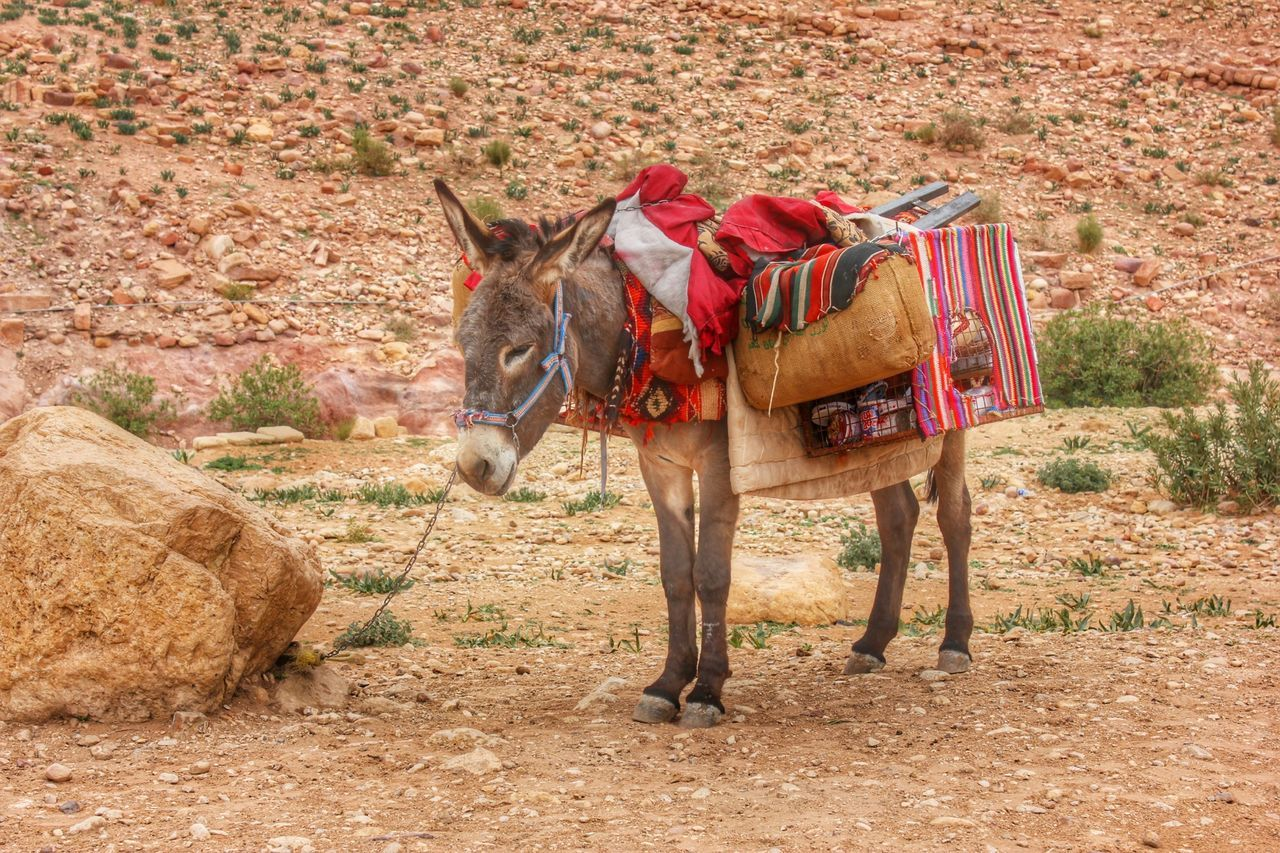 Beautiful stock photos of donkey, Arid Climate, Bag, Carrying, Day