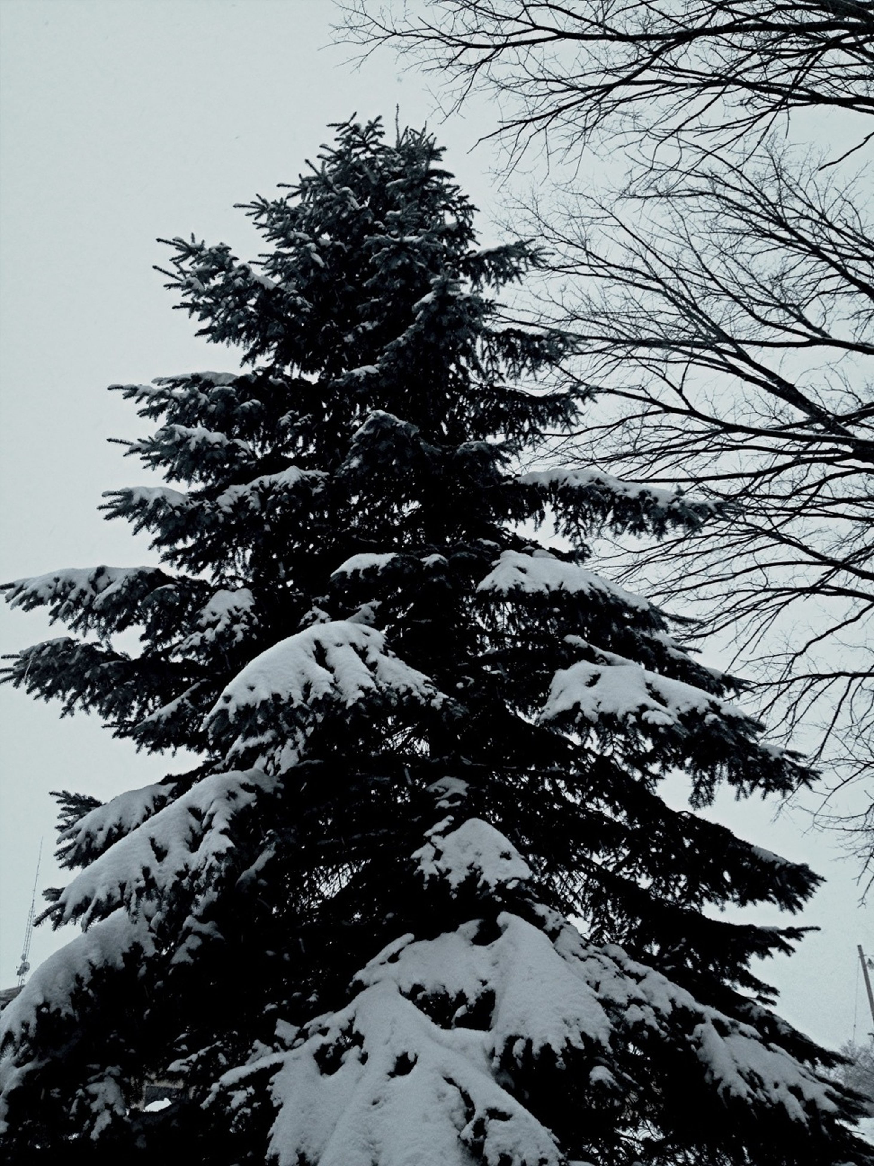 tree, low angle view, branch, clear sky, tranquility, bare tree, nature, tranquil scene, beauty in nature, scenics, sky, growth, snow, winter, outdoors, day, no people, mountain, tree trunk, cold temperature