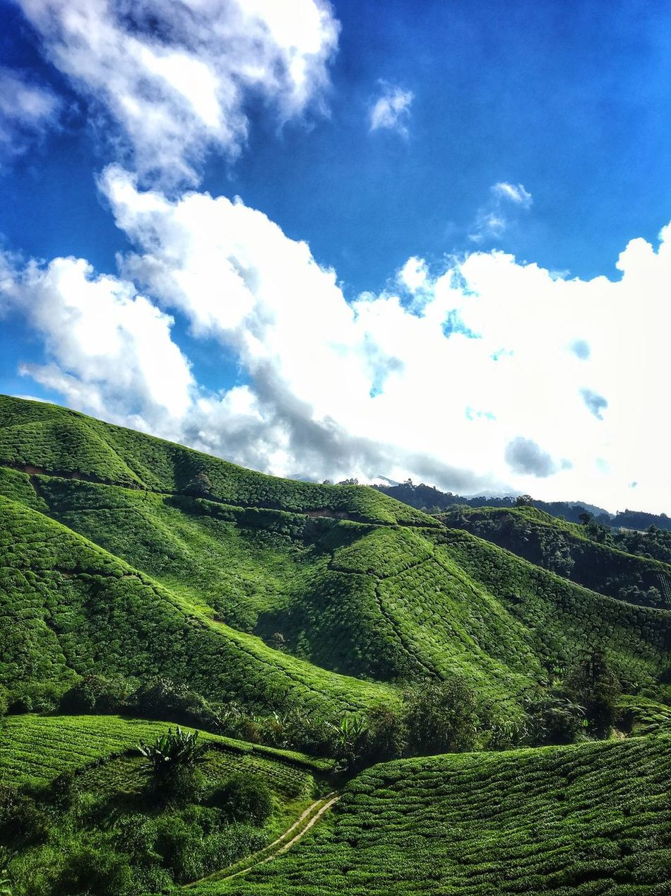 Nature at its best. Nature Beauty In Nature Sky Cloud - Sky Green Color Day Mountain Outdoors Tea Crop Tree Highlands Cameronhighlands Tranquility Views Vibes Mothernatureatherbest Photography Malaysia Truly Asia Visit Malaysia Malaysia Truly Asia First Eyeem Photo