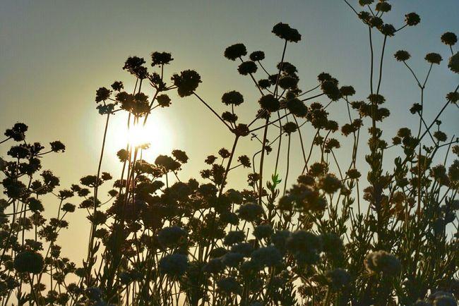 Sunset Silhouettes Golden Hour Sundown Sunset