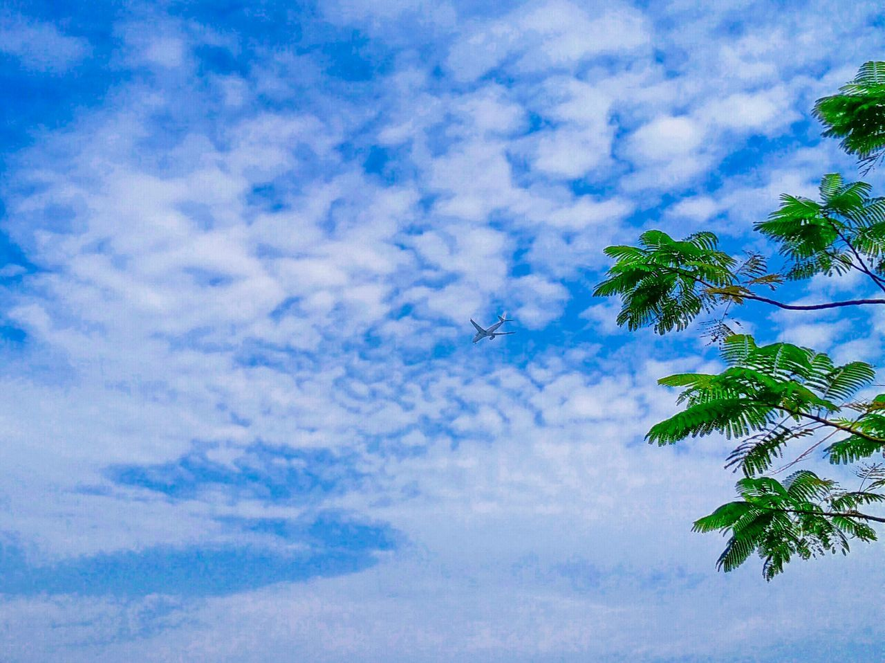 sky, cloud - sky, low angle view, tree, nature, no people, flying, blue, beauty in nature, day, outdoors, scenics, palm tree, bird