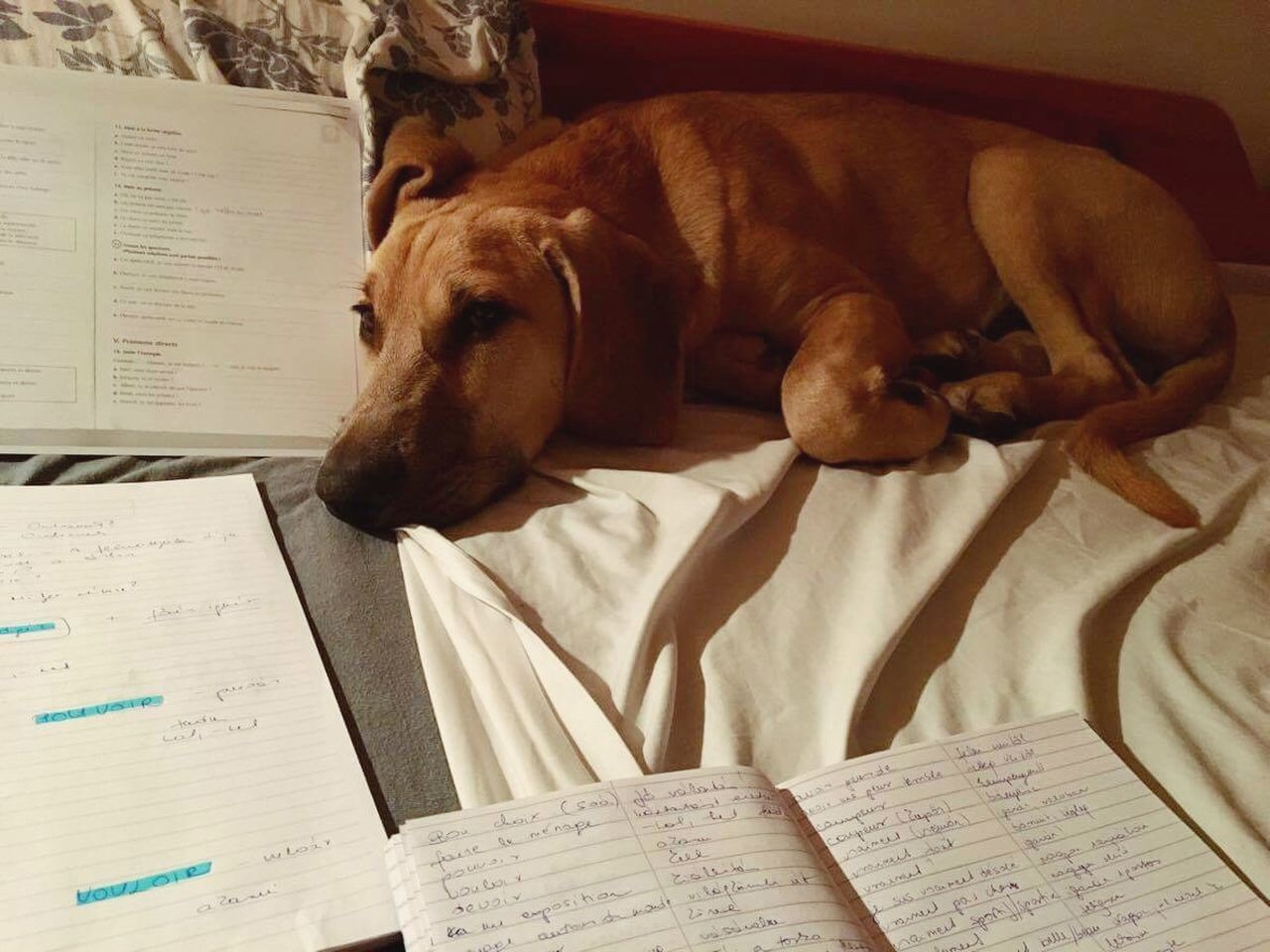 One Animal Paper Indoors  Domestic Animals Mammal Animal Themes Pets No People Day Learn & Shoot: After Dark Learning Learn Sleep Working Dog Sleeping Dog Sleeping Brown Help Dogslife