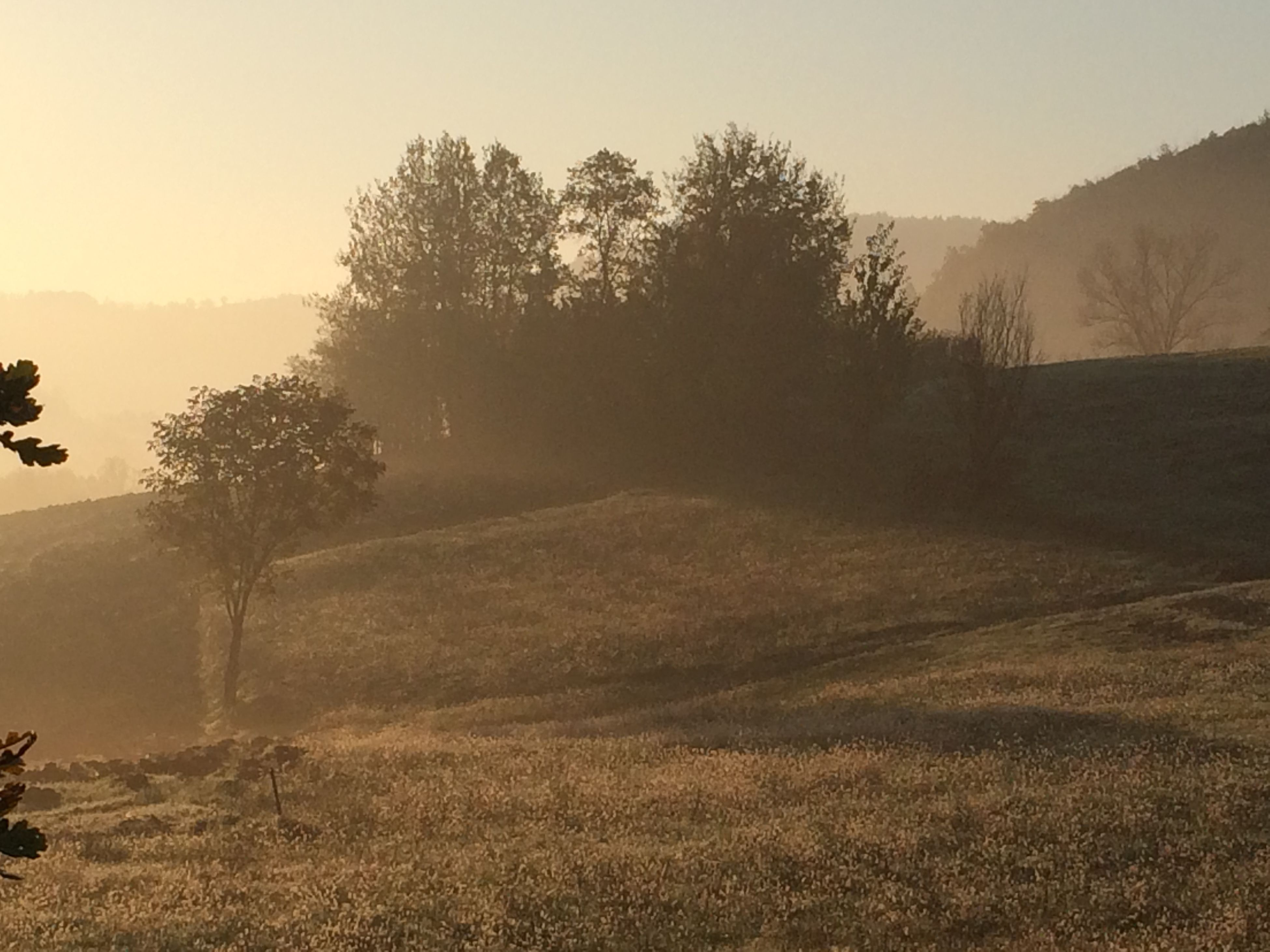 tranquil scene, tranquility, landscape, tree, fog, scenics, beauty in nature, nature, field, non-urban scene, foggy, sky, mountain, growth, remote, idyllic, outdoors, copy space, bare tree