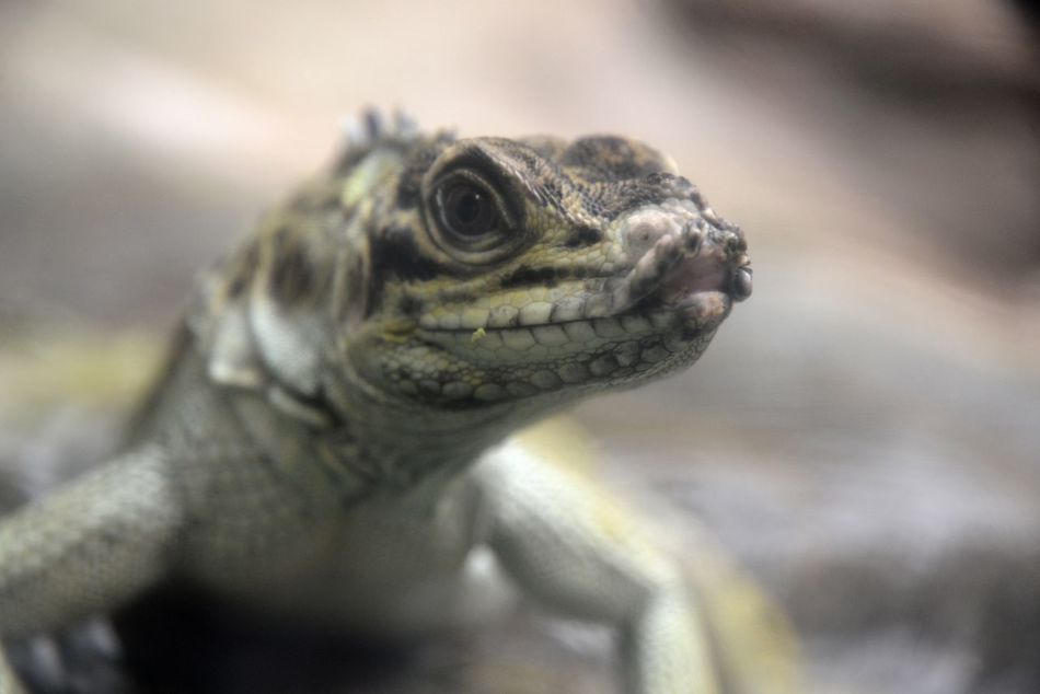 Animal Lover Nature Cold Blooded Close Up Photography Coldbloodedanimal Close-up Close Up Nature Close-up Shot Nature Lover Detail Zoo Exotic Creatures Exotic Pets Exotic Animals Animal Naturel