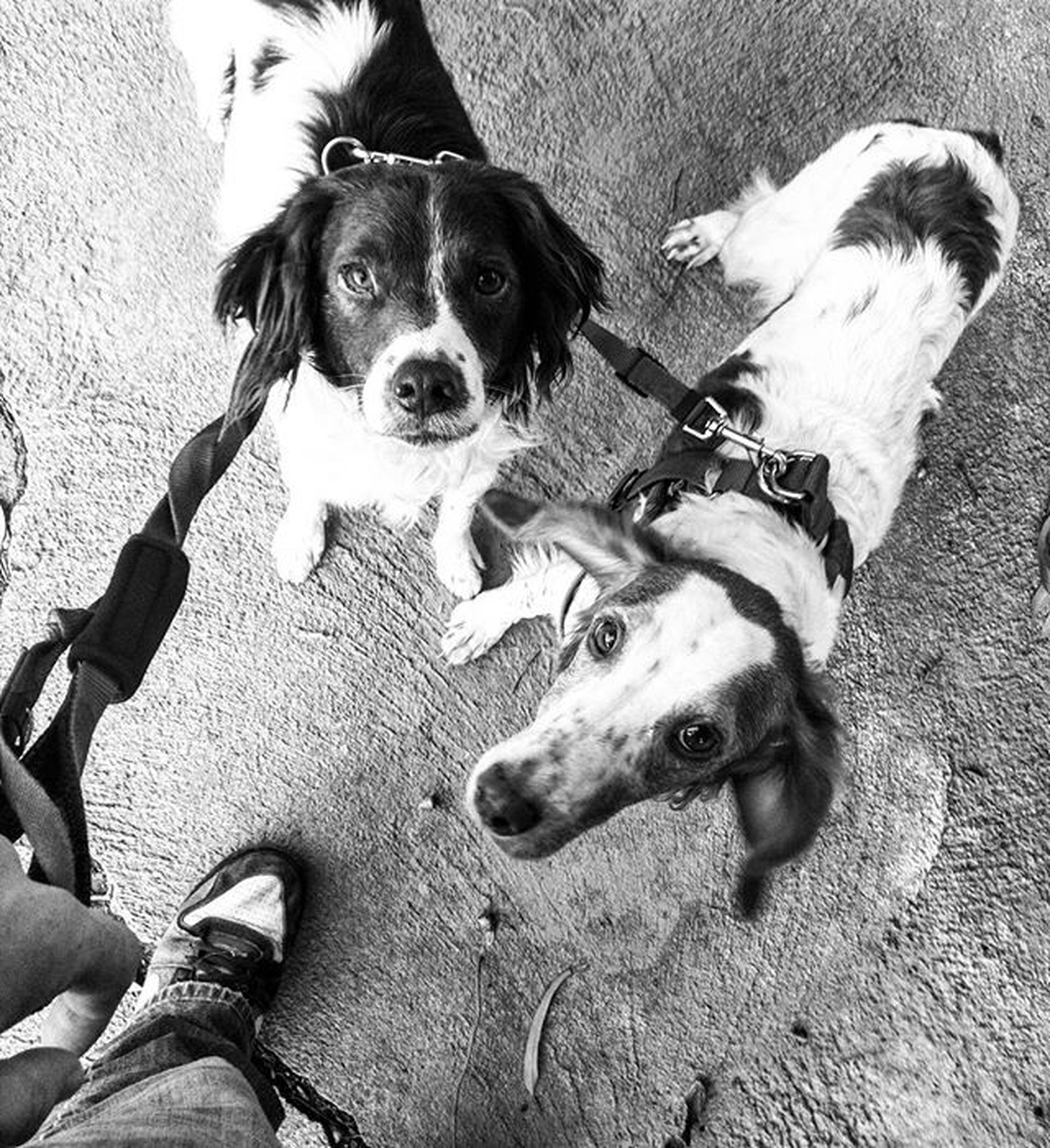 dog, pets, domestic animals, animal themes, mammal, one animal, looking at camera, portrait, high angle view, pet collar, puppy, pet leash, sitting, canine, loyalty, no people, standing, day, relaxation, two animals