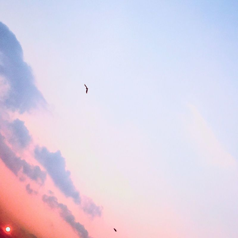 Sky Sunset イマソラ 夕日 Set 暮れる Sunset_collection 夕陽 ゆうひ Sun Good 日本 Japan Nostalgia Bird 鳥 優しい夕陽 Eyeem Photo