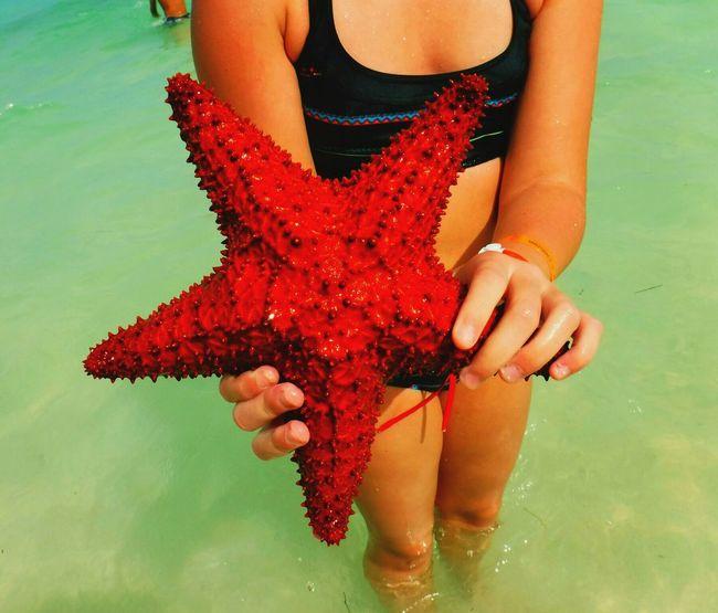 Starfish At Beach Starfish  Sea Water Punta Cana