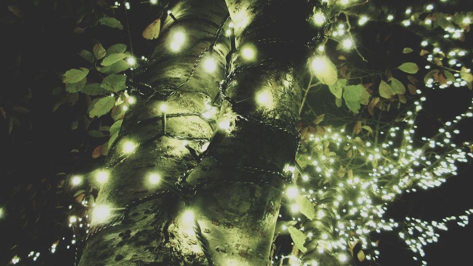 イルミネーションの季節 Keicomoment Beautiful Lights Winter