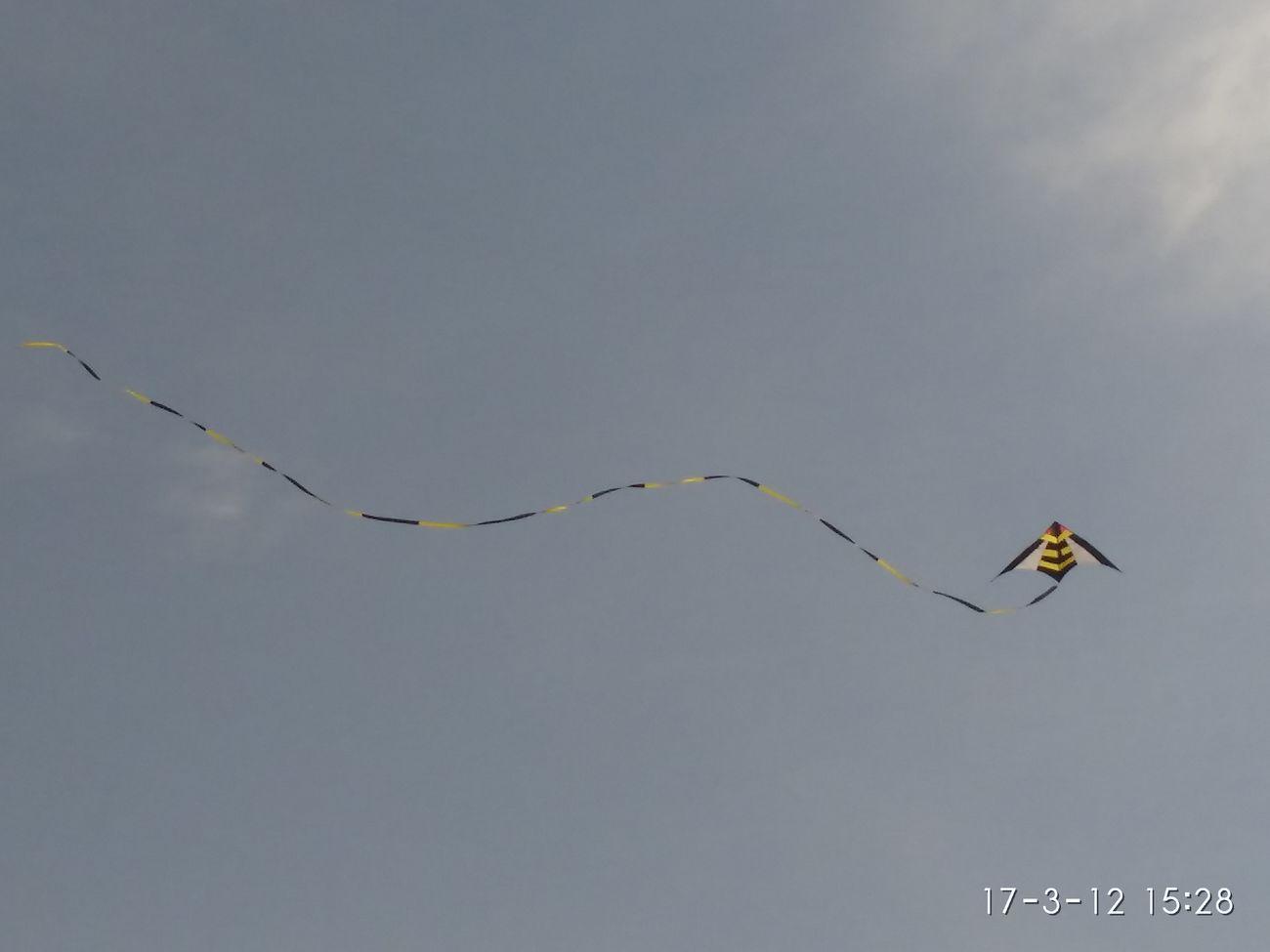 忙趁东风放纸鸢 Flying A Kite
