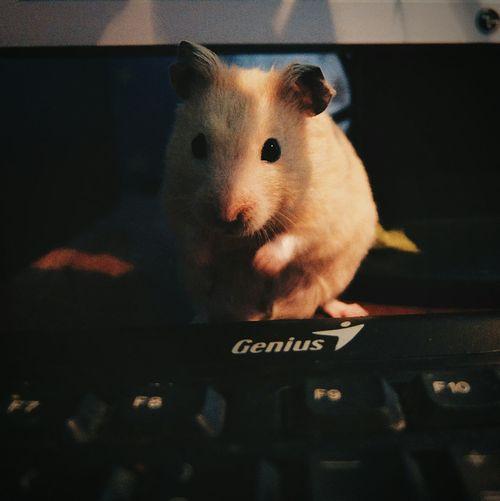 Keyboard Attack! pets