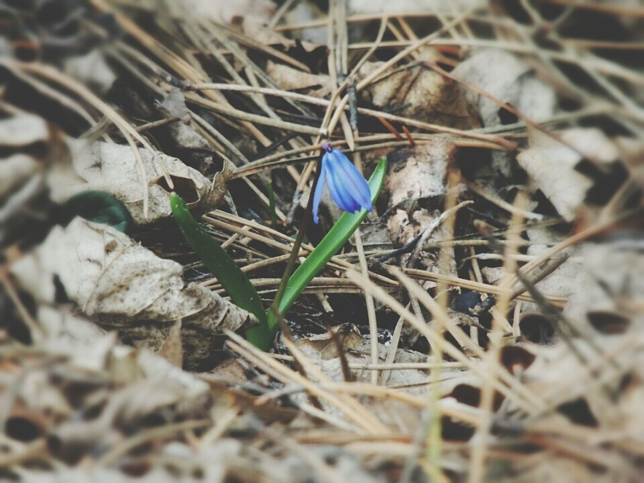 flag, twig, no people, day, nature, outdoors, flower, fragility, close-up