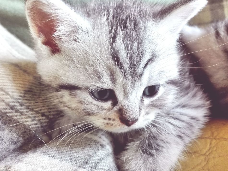 Lovely Cat Eyem EyeEm EyeEm Nature Lover Animals Sweet♡ Puppy Power Cats 🐱 Kitten Eyem Gallery Cat♡ Cat Puppy Kitten 🐱 Kitten AdorableKittensofinstagram Kittenlife Kitten Love Eyemcaptured EyeEm Gallery Eyeem Photography Showcase July