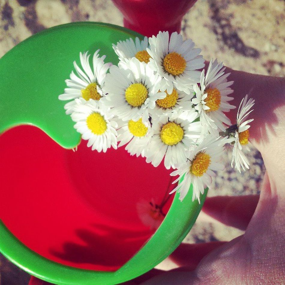 Blume Herz G änseblümchen Weisgelb Grün rot dezent Frühling samsunggalaxis2 Samsung