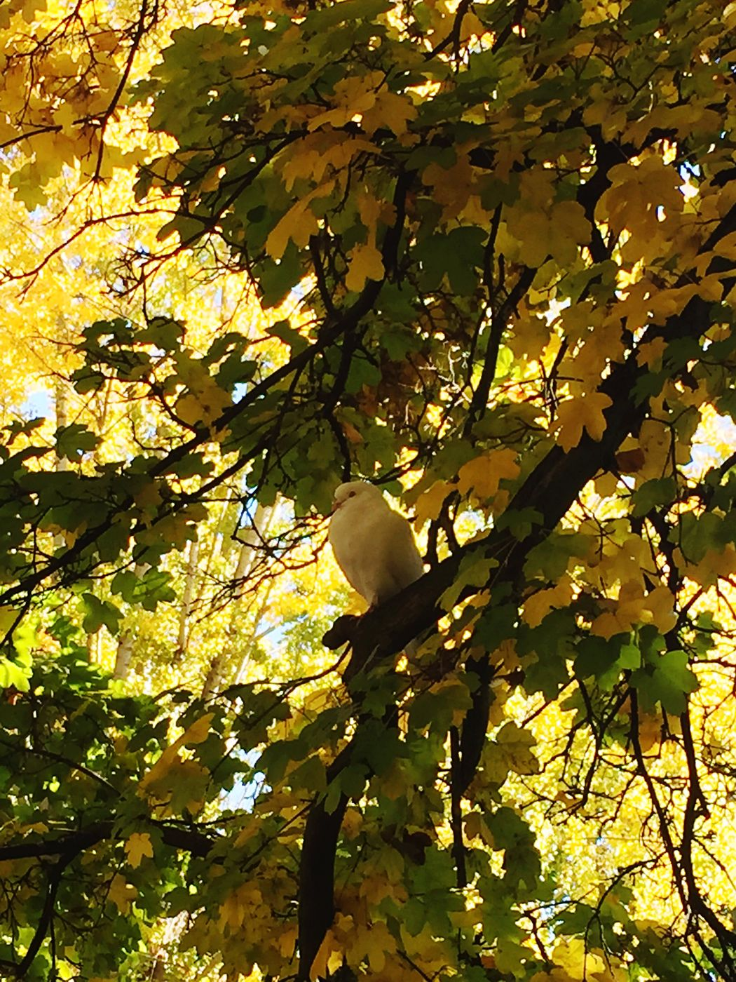 Autumn🍁🍁🍁 Parque Quevedo Palomas Eyemnaturelover IPhoneography