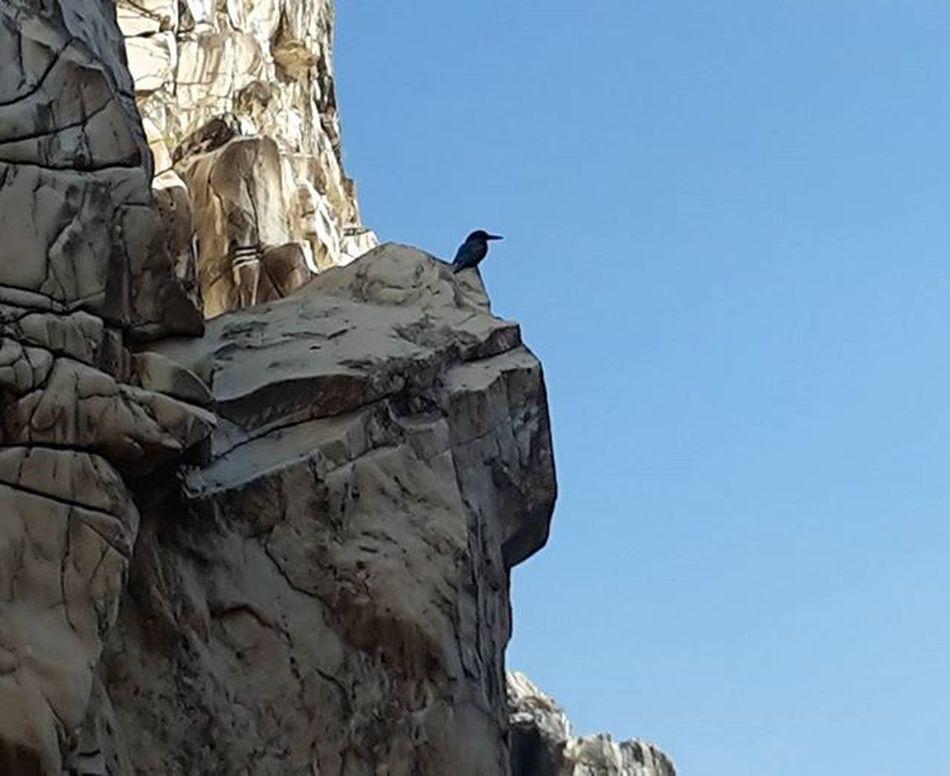 A Kingfisher on the marble rock...@King of good times Beautiful Landscape Marblerock Marblerocks Amazingplaces Incredibleindia Incredible Narmadariver Beautifulnarmada Nature Kingfisher Kingofgoodtimes Northeastindia