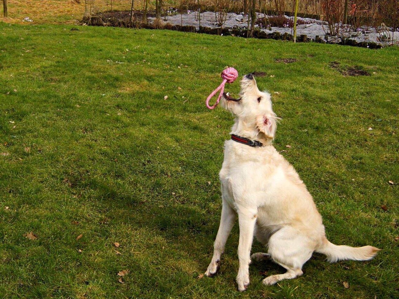 Dog Pets Outdoors Day Fun Game Family Ball Garden Springtime