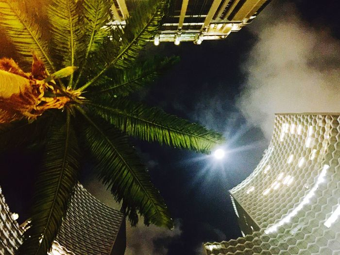 The Architect - 2017 EyeEm Awards High Rise Building Residential Building Commercial Building, Exterior Architecture Proud To Be Outdoors Low Angle View Palm Tree Moonlight Our Project Duo Honeycomb The Great Outdoors - 2017 EyeEm Awards Low Angle View
