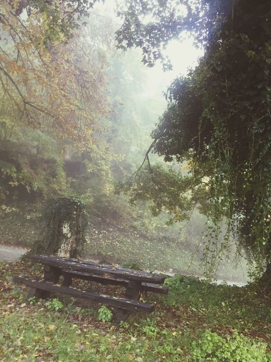 Abandoned Beauty In Nature No People It's Cold Outside Tree Nature Growth Day Bench Wood - Material Forest Outdoors Scenics
