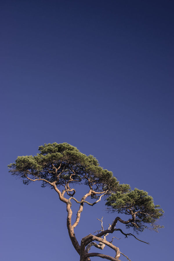 Tree Margam Park Non-urban Scene Sky Cloudless Sky