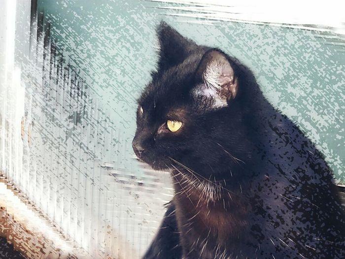 Up Close & Personal Cat Mismo Black Cat I Miss You