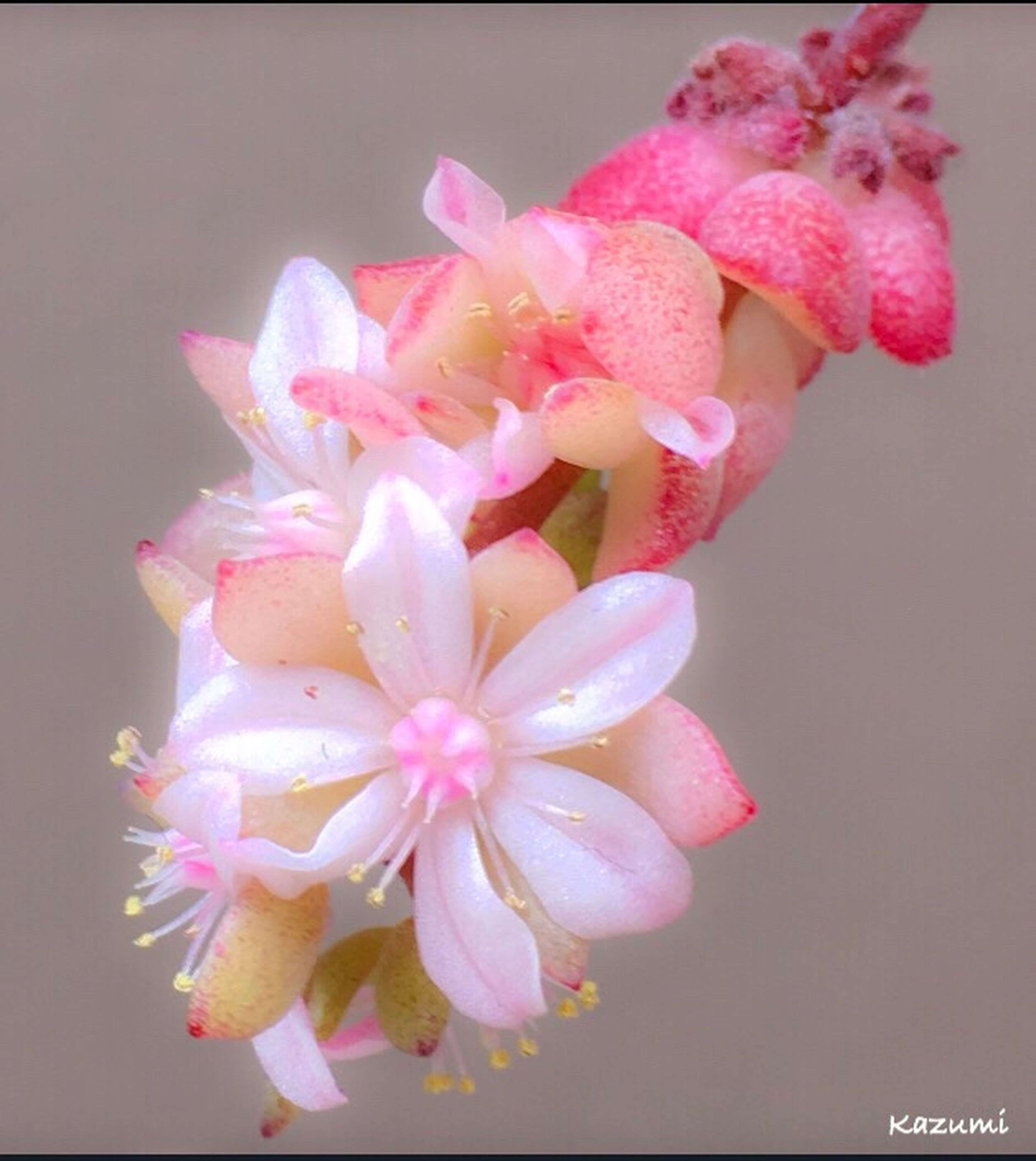 flower, freshness, petal, pink color, no people, fragility, beauty in nature, flower head, close-up, nature, day, outdoors