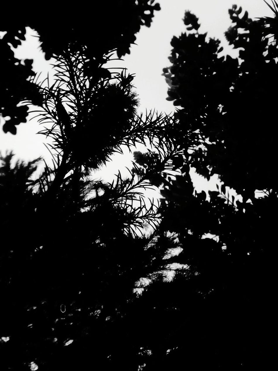l Leaf Eyemphotography With Smartphone Relaxing Enjoying Life Eyem Lisbon - Portugal Taking Photos Eyemphotos Hello World Eyem Best Shots Eyem Gallery Eyem Photography Eyemphoto Hi! Check This Out Androidography Street Photography Android Photography Eyemphotography Go By Yourself Leafes And Trees Learn & Shoot: SimplicitybLeaf 🍂 Leafes Shadow Leafporn