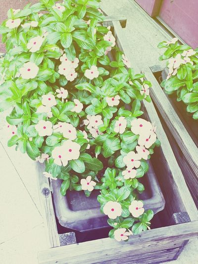 On The Road Flowers Flower Power So Cute!!:D